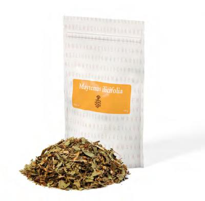 Maytenus Ilicifolia Tee 105 g